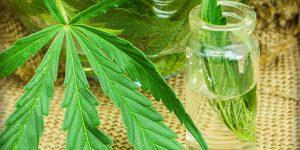 medical marijuana oil cbd